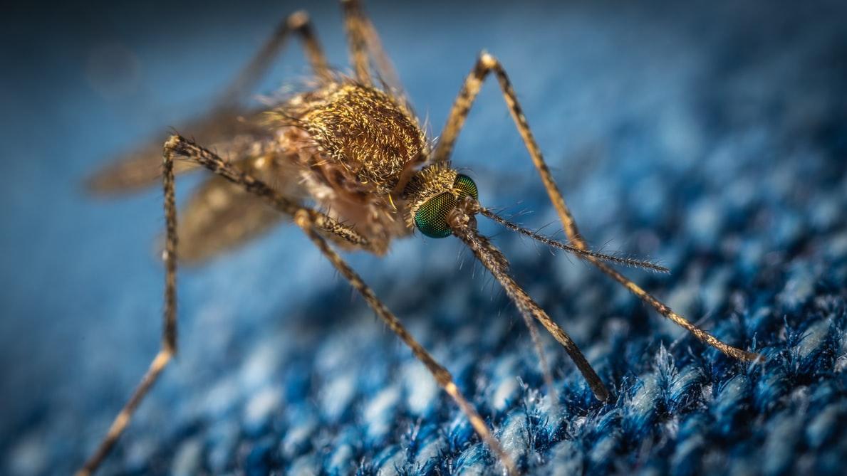 蚊の唾液に対するワクチン!